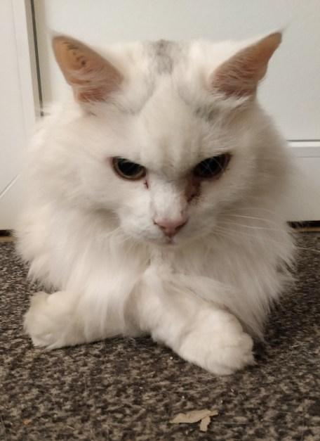 What Is It Like To Be A Developer Glenn Dufke? More of Glenn's cat